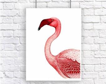 Flamingo Pink Bird Large Nautical Vintage Style Art Print Beach House Decor