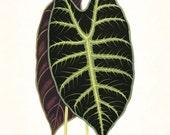 Vintage Botanical Tropical Leaf Series No.4 - Giclee Art Print - Antique Botanical - Print - Poster - Canvas Art - Botanical Print