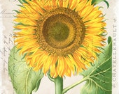 French Sunflower Collage Botanical Print - Giclee Canvas Art Print - Poster - Wall Art - Home Decor - Multiple Sizes Starting at USD 15.00+