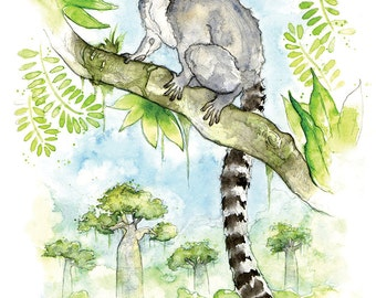 Giclee Fine Art Print: Ring Tailed Lemur Watercolour Painting