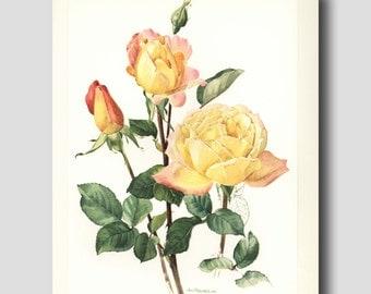 "Vintage Botanical Print, English Garden (Flower Illustration, Yellow Office Wall Art) ""Grandmother Jenny""  No. 22"