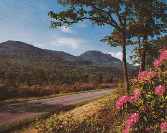 """Ca. 1950's """"Rhododendron"""" Blue Ridge Parkway, VA Topographical Picture Postcard - 2204"""