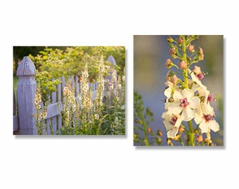 Flower Photography Set of Prints, 2 Photos Gallery Wall Art Collection, Kitchen Decor or Bathroom Art, Purple Cream Green Herb Garden Photos