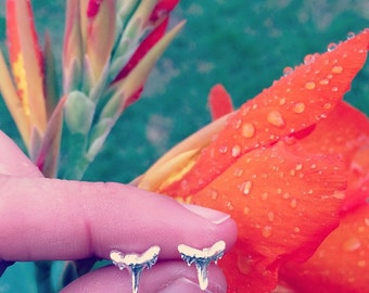 Tiny Sterling Silver Shark Tooth Stud Earrings by Bella Beach Jewels