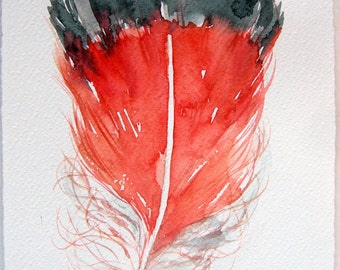 Watercolor painting of feather. Coral red feather illustration. Art original only. Feather's painting. Home decor. Small watercolors