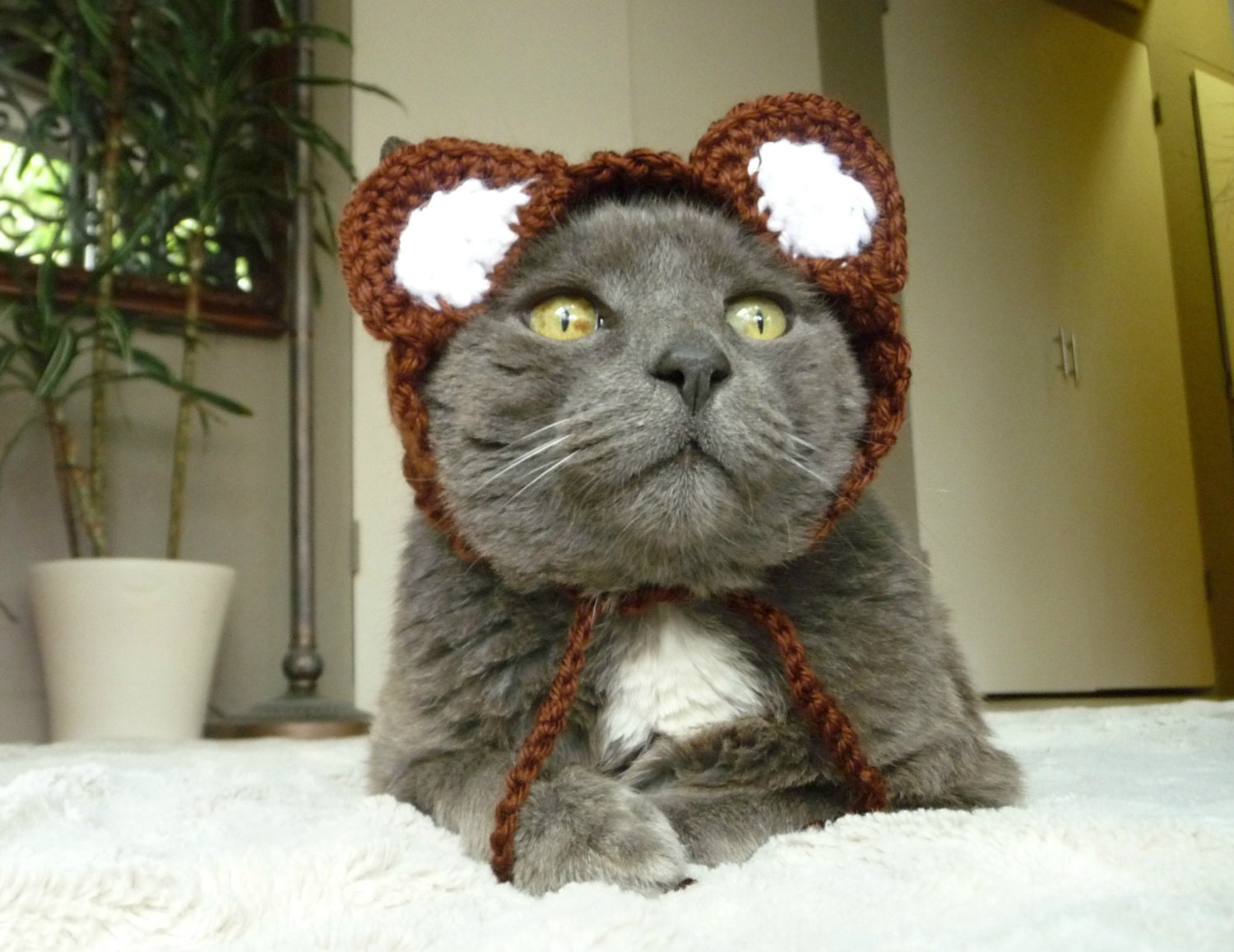 Cat Costume Hat Dog Costume Hat Bear Cat Hat Bear Dog By : pokemon cat costume  - Germanpascual.Com