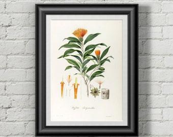Flower Botanical print. Botanical illustration. Botanical art. Antique botanical illustration. Flower print.