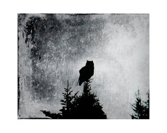 Owl Art, Owl Photography, Bird Art Prints, Black and White Art, Woodland Photography, Nature Fine Art Prints, Silhouette Art