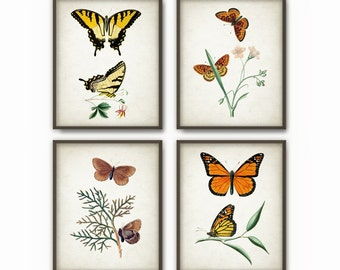 Butterfly Prints Set of 4 - Butterfly Decor - Vintage Butterfly Home Decor - Antique Butterflies Book Plate Illustrations - AB100