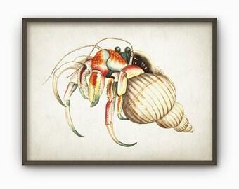Hermit Crab Wall Art Poster - Crab Print - Crab Poster - Crab Decor - Crab Illustration - Antique Crab Book Plate Print - AB181