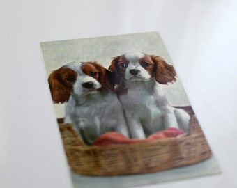 Vintage Postcard Spaniel Puppies In Woven Basket Bed - ShortSupplies