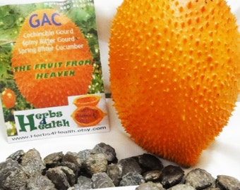 Fresh Organic RARE Exotic Gac Fruit Seeds, The Fruit from Heaven, High in Phytonutrients, Very Medicinal, Easy to Grow