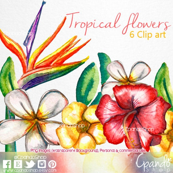 Tropical Flowers Png Tropical Flowers 6 Clip Art