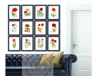 Red Poppies Wall Art set of 12 Decor Red Poppy Summer Decor Flowers wall art, Veterans Day Poppy Day Decor, Wall Art Gnosis Botanical Art