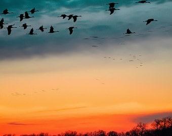 Sandhill Cranes - bird photography. sandhill cranes. sunset print. blue and orange. nature art print. nature photography. bird migration