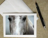horse photo notecard, Father's Day card, greeting card, photo card, horse greeting card, horse stationary