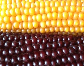 Buttered Popcorn Organically Grown Pennsylvania Dutch Heirloom Variety Rare Seeds