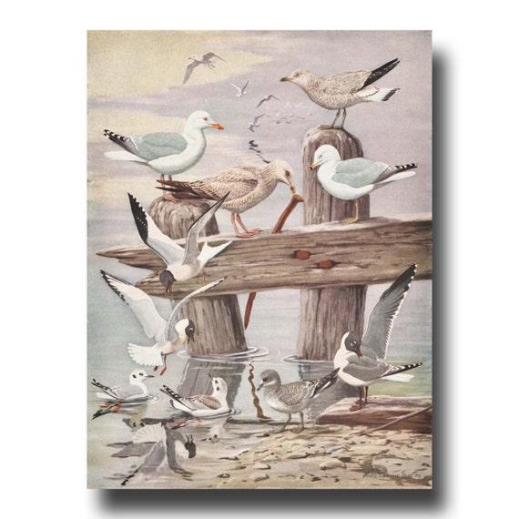 Beach Wall Art Seagull Art 1930s Vintage Seagull Wall Art