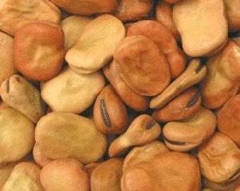 15 Fava Bean Seeds Giant Bean Seeds