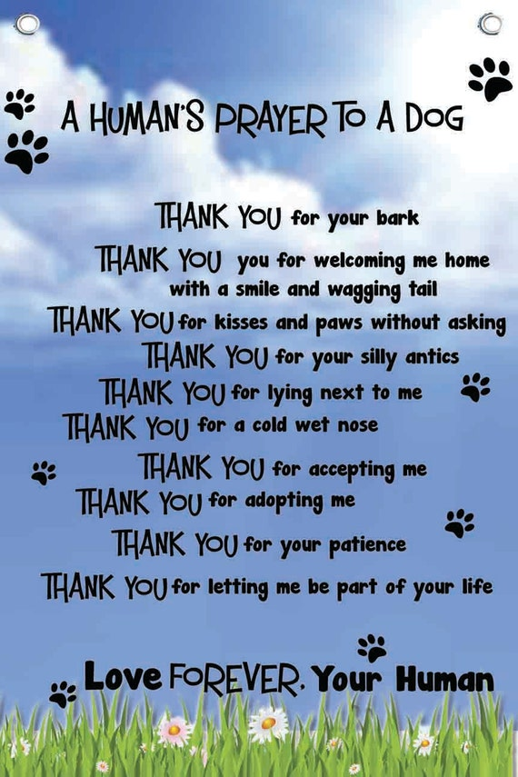 Dog S Prayer 12 W X 18 H Wall Quotes