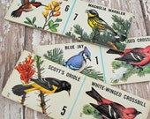 Vintage Bird Cards, Child's Domino Game Cards, Heavy Cardstock, Rectangular Pieces (Lot 1) #5 ok
