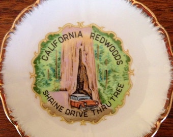 Vintage Souvenir plate. California redwood drive-thru tree.