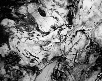 Petrified Wood Series - Black and White Fine Art Photograph