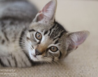 Just Chillin' - Color Version - Cat Picture - Animal Art Print - Cat Art - Fine Art Print - Animal Photo - Cat Decor - Baby Animal Photo