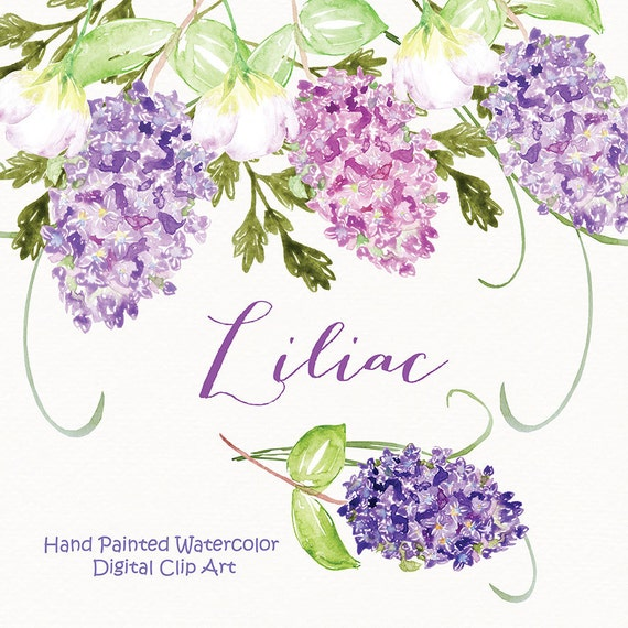 Watercolor lilac flowers clipart spring flower clipart for Spring flowers watercolor