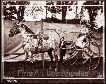 """Fred Glasier Photo, """"Circus Horse and Carriage"""", 1890-1925"""
