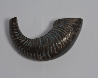 """Rams Horn Shofar  Kosher  Polished Made in Israel  best sound best price best quality between 10""""-12"""