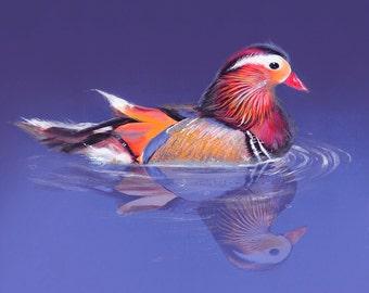 Mandarin Duck - Animo Reflecto serie