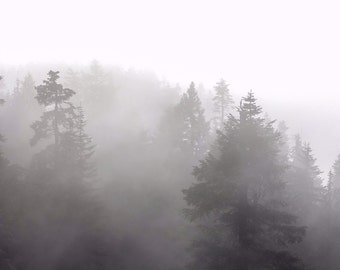 Mystery in the Mist- Vancouver, Canada, Trees, Fog, Nature, Travel, Decor, Living Space, Cloudy, black and white,Mystery