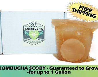 KOMBUCHA SCOBY - Starter Culture - Artisan Crafted - Brews up to 1 Gallon - WeLoveKombucha