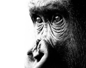 Wildlife Portrait 2 - Gorilla