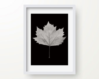 Nature Wall Art, Original Photography, Abstract Print, Wall Print, Modern Art Print, Minimalist Art