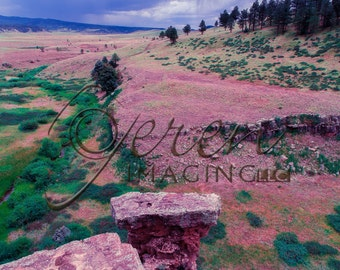 Colorado Photography, Landscape Photography, Pagosa Springs, Nature Decor, Colorado Mountain, Tranquil Wall Art, Green Landscape, Colorado