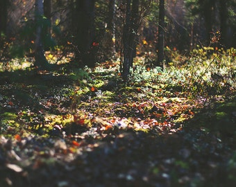 Forest Floor - medium resolution