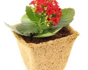"Coconut Coir Seed Starter Kit / Seedling Germination Pot / 4"" Organic Grow Pot / Indoor Outdoor Planting & Gardening, 6 Pack - FREE SHIPPING"