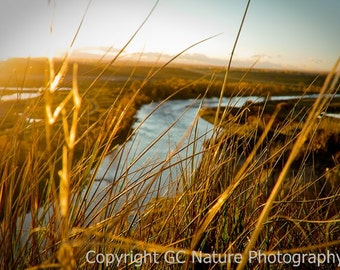 Sunlighted Grass above Bow River