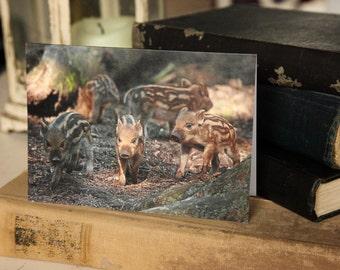 Wild Boar Piglets Greetings Card