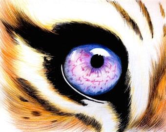 Color Pencil Tiger Eye Digital Print