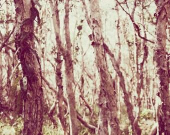 Paperbark Dense Forest Textured Atmospheric Fine Art Photography Print