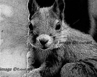 Squirrel Pen and Ink Drawing - Stippling -  Limited signed digital print