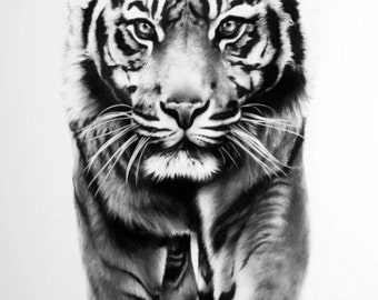 PRINT: Limited Edition Tiger Drawing