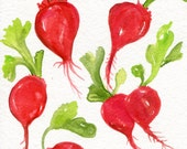 Radishes Watercolors Paintings Original, Vegetable watercolor. kitchen decor. original watercolor painting of Bunch of red Radishes, small