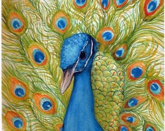 Peacock  Watercolor Print. 8 x 10, Small Bird Art, Peacock Wall Art