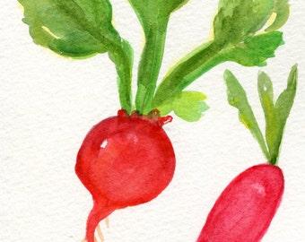 Red Radish, French breakfast radish watercolors paintings original, Vegetable art, 4 x 6, original watercolor painting of radishes