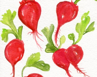 Radishes Watercolors Paintings Original, Vegetables. kitchen decor. culinary painting, culinary watercolor of Bunch of red Radishes, small