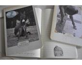 Donkey Wisdom journals